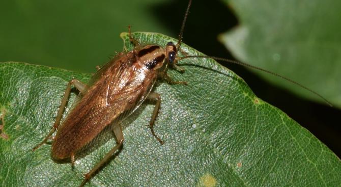 Снимка: Зоологическа градина предлага да кръстите хлебарка на бившия си