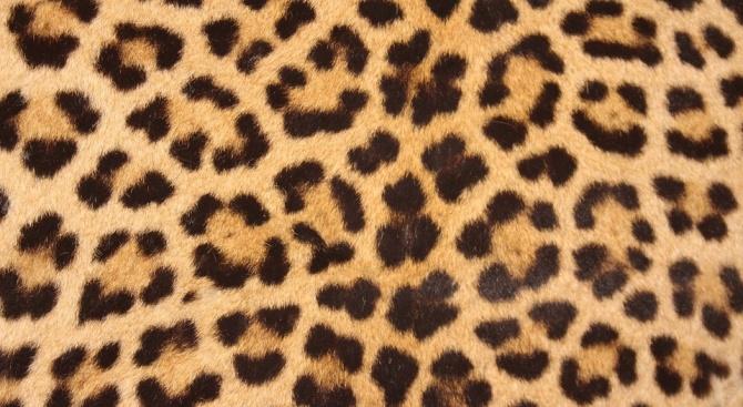 Снимка: Леопардовата окраска ще бъде следващият моден тренд в мъжките прически