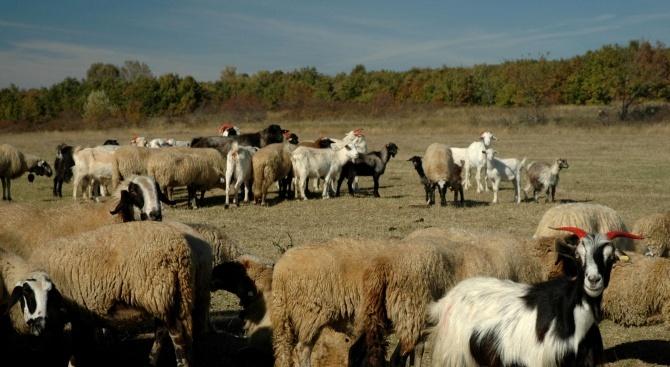 БАБХ организира среща между ветеринарните служби на България, Турция и