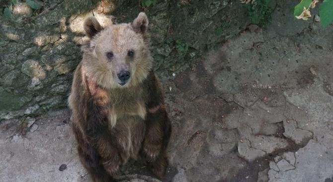 Мечката Свобода от варненския зоопарк празнува 30-годишен юбилей (снимки)