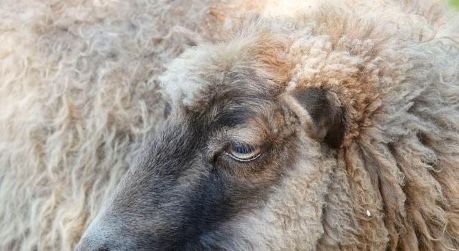 Заплита се казусът с животните от фермата на Ана Петрова