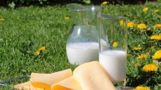 Важна новина за потребителите:  От днес влизат в сила новите правила за имитиращи млечни продукти