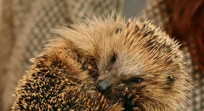 Приют за диви животни в английския град Мъч Уенлок се