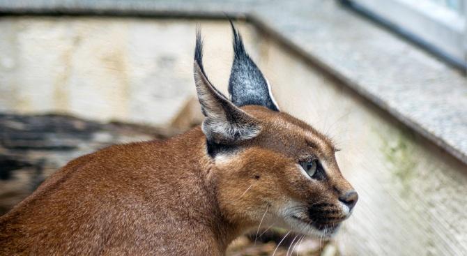 Екоинспекцията в столицата обяви, че е регистрирала по грешка дивата