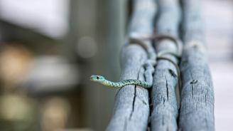 Десетки хиляди хора умират от ухапвания от змии по света всяка година