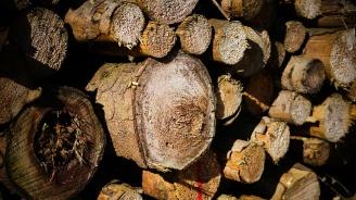 Спипаха камион с незаконно добита дървесина