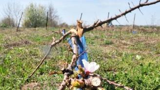 Снежната зима се е отразила добре на овощните насаждения в Кюстендилско