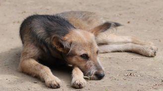 Общински кучешки приют откриха в Хасково
