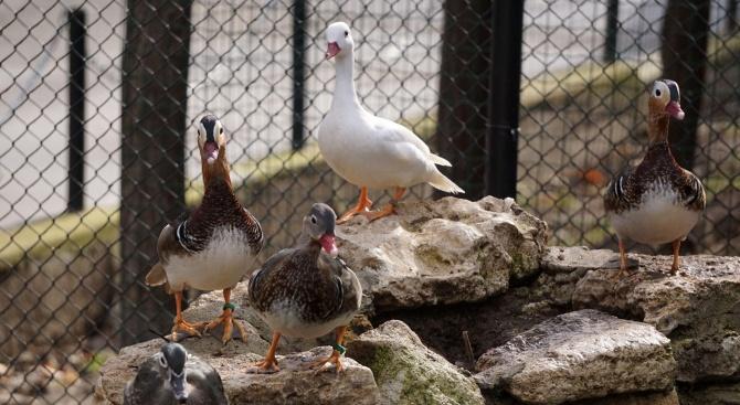 Варненският зоопарк има нови обитатели (снимки)