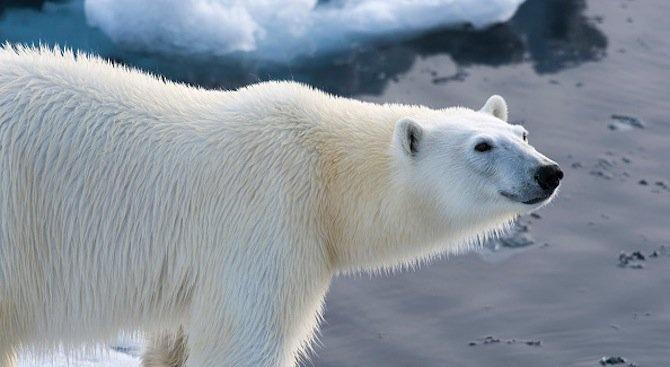 Температурите в Арктика са най-високите за последните 115 000 години