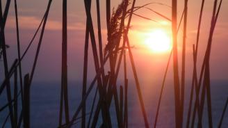 Рекордни горещини обхванаха Нова Зеландия
