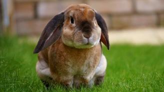 Семейство издирва заек-беглец с размерите на куче (видео)