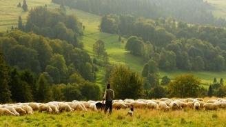 Изтича срокът, в който фермерите доказват, че са продали определена продукция, за да получат субсидии