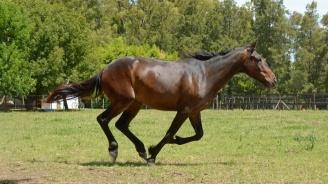 Установен е случай на инфекциозна анемия при кон в пазарджишко село