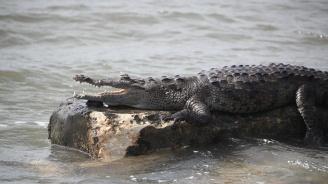 Индия мести стотици крокодили заради най-високата статуя в света (снимки)