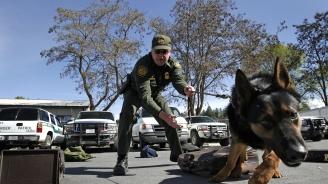 Полицейско куче оживя след преливане на кръв от негов четириног колега