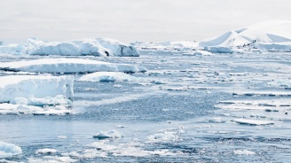 На Антарктида са открити пет нови за континента фосилни растителни вида