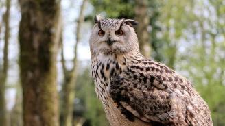 РИОСВ - Пловдив  е спасила 69 вида защитени птици през изминалата година