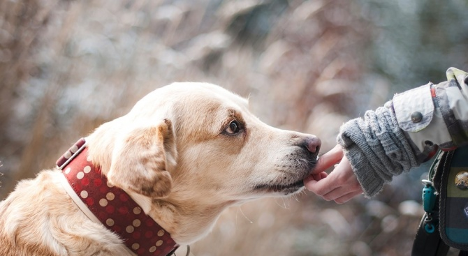 Крадец на кучешки легла броди из центъра на София