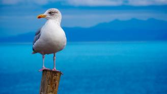 Чайка посещава всеки ден своя 80-годишен спасител