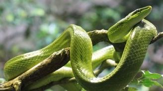 Как и при какви условия може да гледаме змии вкъщи
