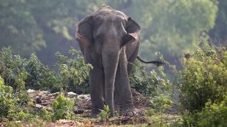 Слоница почина на рекордните 88 г. в Индия
