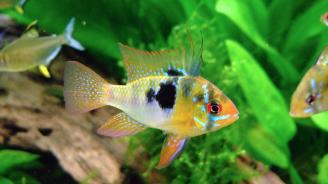 Риби разпознават себе си, гледайки се в огледало