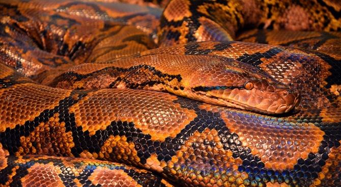 Полицаи измъчвали заподозрян със змия (видео 18+)