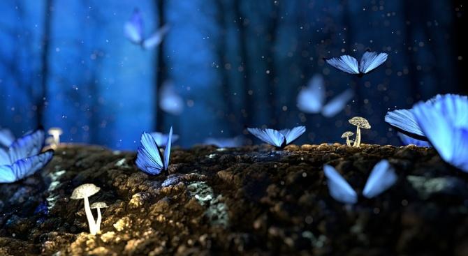 """Насекомите изчезват """"стряскащо"""" бързо, пеперудите - сред най-застрашените"""