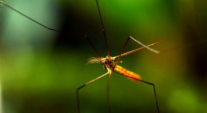 """Учени 'изключиха"""" апетита на комарите, за да спрат да търсят кръв"""