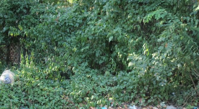 Почистват растителността и наносите по пътя на изхода от Разград към Търговище