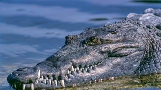 Крокодил нахапа смъртоносно мъж пред очите на племенника му