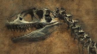 Откриха цял скелет на динозавър до река в Танзания