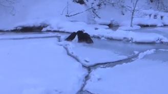 Природозащитници спасиха орел в Мичиган