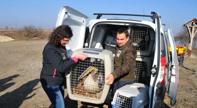 Пуснаха на свобода пеликан и патици спасени от бракониери