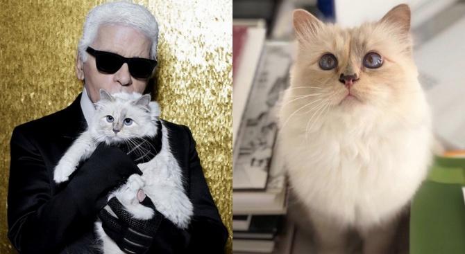 Котката Шупет може да наследи част от богатството на Лагерфелд