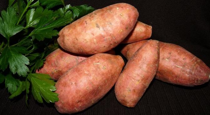 Снимка: Любопитни факти за сладкия картоф