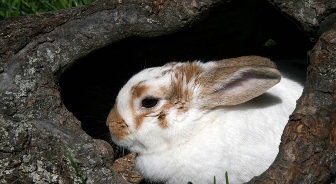 Снимка: Зайче направи 20 номера за минута за световен рекорд