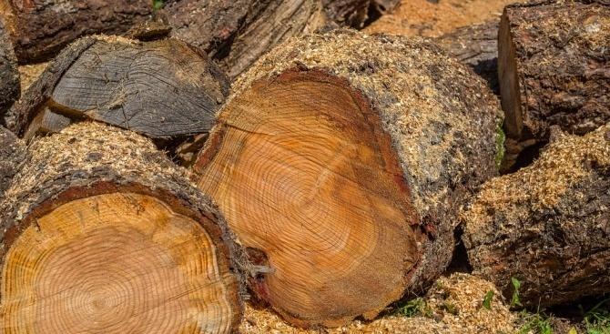 Снимка: Заловиха каруца, натоварена с незаконни дърва