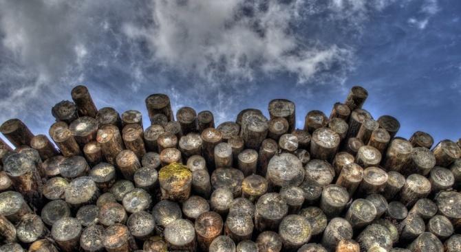Снимка: Откриха каруца с незаконни дърва в селски двор