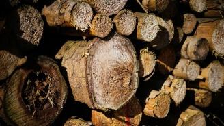Хванаха каруца с незаконни дърва