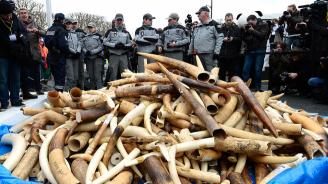 Осъдиха кралицата на слоновата кост на 15 години затвор