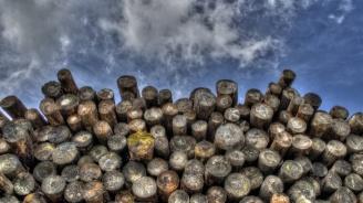 Откриха каруца с незаконни дърва в селски двор