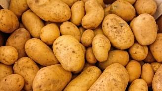 Картофопроизводителите ще получат 1,6 млн. лева за борба с вредителите