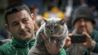 В София се провежда международна изложба на котки