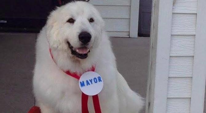 Тринадесетгодишното куче Дюк, което от 2014 година непрекъснато беше избирано
