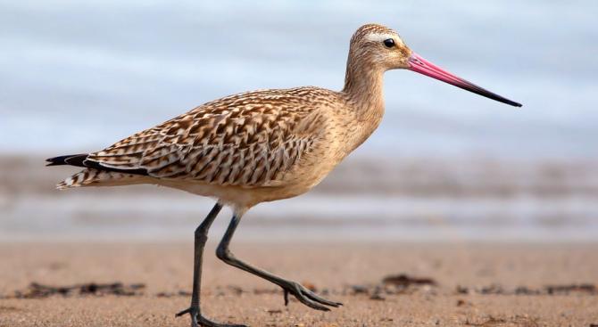 Отпадъците от балоните - най-опасни за морските птици