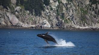 Мъртъв гърбат кит беше открит насред амазонската джунгла