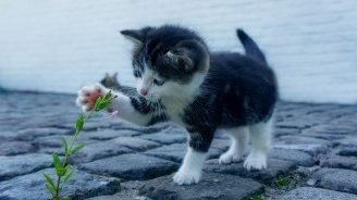 Котка с витилиго смени цвета си