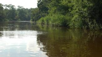 Разследват сигнал за замърсяване водите на река Осъм